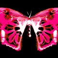 climate-change-pink-butterfly