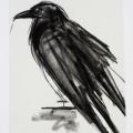 crow-print